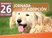 Jornada de adopción para animalitos rescatados por fundación 'Garras y Patas'