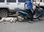 Detienen a hombre que arrastraba a su perro atado a una moto en Argentina