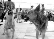 Aumentan los casos de mordeduras de perros callejeros en Magallanes