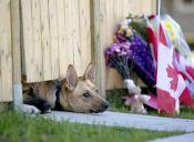 Perritos de soldado muerto en Canadá aún esperan su regreso a casa