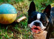 La Serena: Jornada de adopción sábado 25 de octubre