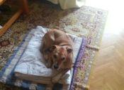 Teresa Romero afirma que la muerte de su perrito Excálibur fue