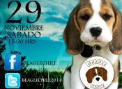 VI encuentro Beagle Chile reunirá fondos para los niños de la Teletón