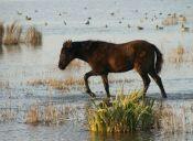 Mira la reacción de este caballo al caminar por primera vez en el agua