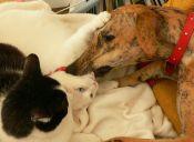 Activistas suizos buscan prohibir consumo de carne de perros y gatos en el país