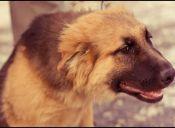 Infecciones de oídos en perros: por qué se producen y cómo tratarlas
