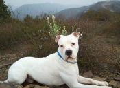 Entrenador de perros acusa a padre de Justin Bieber por maltrato animal