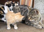 La historia de los cuatro pequeños gatitos hambrientos