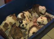 PDI rescató a 48 perritos de refugio ilegal en Curacaví