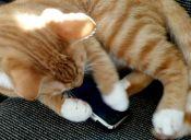 Los gatos caen de pie, ¿los iPhones también?