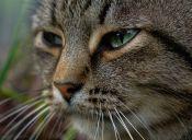 Gatito regresa a su hogar tras 12 años perdido