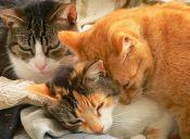 ¿Gatos o perros? Estudio afirma que felinos se parecen cada vez más a los canes