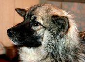 Niña perdida por 12 días en un bosque de Siberia se reencontró con perrito que la salvó