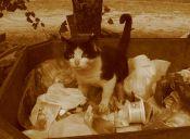 La historia del gato