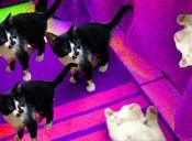 Corea del Sur: Laboratorio clona mascotas por más de 60 millones de pesos