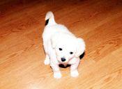Historias de Mascotas: El secreto que salvó a 'Pinky' de las lombrices