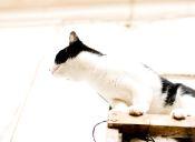 ¿Por qué los gatos no le temen a las alturas?