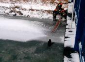 Rescate Animal: Perro cae en las frías aguas de un río en Polonia