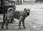 Perrito fue abandonado junto a una maleta en estación de trenes de Escocia