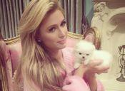 Paris Hilton aumentó la manada tras adoptar a su octava mascota