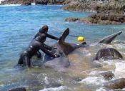 Encuentran a un tiburón en playa de Cachagua