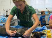 Plan Nacional de Esterilización de mascotas comenzará a operar a fines de febrero