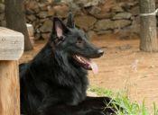 Historias de Mascotas: Mi perrito se convirtió en policía