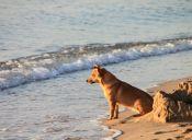 Increíble: Esto es lo que hace un perrito cuando ve ahogarse a su dueño