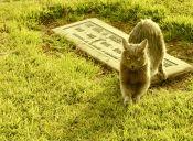 Gatito que fue dado por muerto regresó a su hogar tras cinco días enterrado