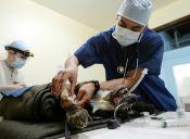 Lifting y rinoplastias en perros, ¿un aporte a la salud de las mascotas?