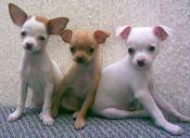 Ojo con las enfermedades que pueden transmitir las mascotas