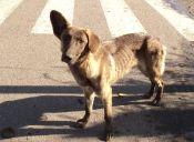 ¿Qué hacer con los perros callejeros?