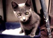 Desechos felinos, un problema subestimado