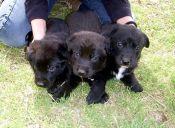 Mascotas y el 18 de septiembre: ¿Cómo cuidarlas?