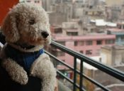 Hoteles para mascotas: ideales para este 18
