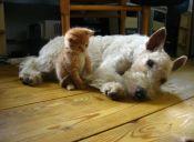 Cómo hacer convivir perros y gatos en la misma casa