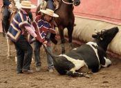 Rodeo en Chile: Una tradición que maltrata