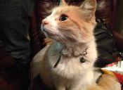 Según estudio, las naciones desarrolladas cuentan con más felinos