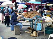 Un millón de perros callejeros; sin legislación, no hay salud ni comida