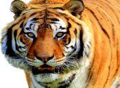 Conoce los animales que se extinguieron en los últimos 250 años