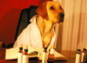 Conoce de qué se trata la terapia de Flores de Bach para mascotas