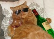 ¡En Japón crean vino especialmente para gatos!