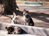 El maltrato animal podría comenzar en la infancia de las personas