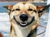 En Estados Unidos aumentan casos de intoxicación por marihuana en perros
