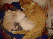 ¿Cuándo es correcto separar a las gatas de sus crías?