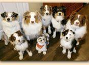 Estados Unidos: Animalista se suicida junto a sus treinta perros
