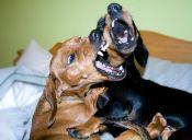 ¿Se puede saber qué sienten los perros sólo con el ladrido?