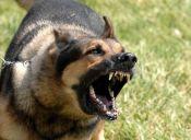 Algunas razones por las que tu perro podría volverse agresivo