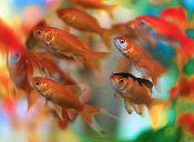 Dime qué peces tienes y te diré quién eres
