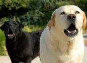 Consejos para que tu perro deje de ladrar en exceso